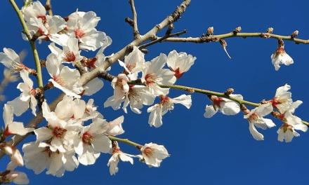 INTRATUIN | Appels met Peren(bomen) vergelijken