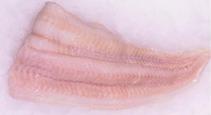 Vishandel Tel: 'Deze vis is in de zomermaanden op zijn best!'