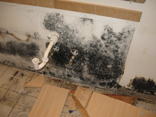 cleaning black mold steps