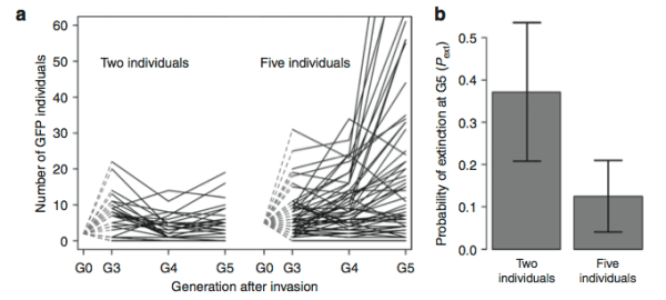 When a fitter line of worms starts at a higher frequency, it is more likely to evade drift and spread through an experimental population. From Figure 1 of Chelo et al. (2013)