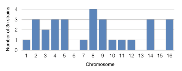 Among the 145 sequenced MA lines, 31 strains had an aneuploidy.  29 out of 31 strains had a chromosome duplication. Adapted from Table 1 in Zhu et al. 2014.