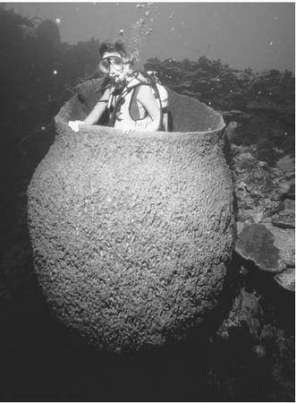 A diver inside a giant barrel sponge. Photo from deepseanews.com
