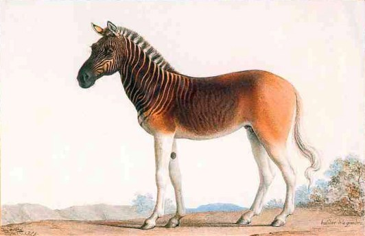 Painting of a stallion in Louis XVI's menagerie at Versailles by Nicolas Marechal, 1793. Photo from  WIkipedia.