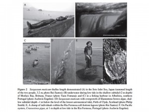 From Engelen et al. (2015) Oceanography and Marine Biology: An Annual Review 53: 81-126