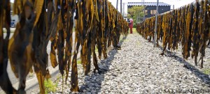 D7000s_2690_kelp drying