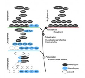 Figure 4. Stepwise acquisition of symbiotic genes in the green lineage. The appearance of new domains in advanced charophytes led to the emergence of new protein families and to the evolution of the symbiotic signaling module via the neofunctionalization of existing proteins (DMI1 and CCaMK). Most of the downstream symbiotic genes evolved in basal land plants via gene duplication in these newly evolved gene families (i.e., STR) or by combining existing domains in new proteins (i.e., VAPYRIN). Finally, genes originating from lineage-specific duplications were recruited independently to fulfill their symbiotic functions (PT and H+-ATPase). Delaux et al. 2015
