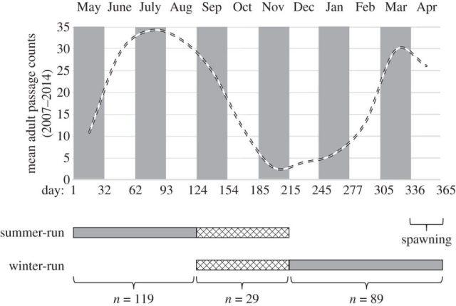 Migration timing in steelhead. From Hess et al., 2016.
