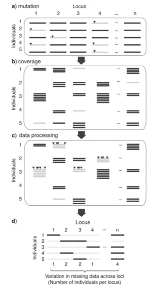 Figure 1 from Huang and Knowles (2016), highlight the origin of missing data from library preparation to sequence assembly.