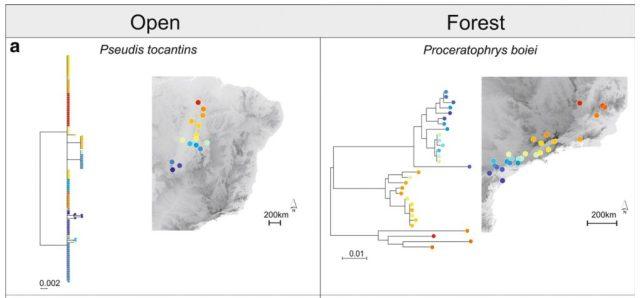 Rodríguez et al. (2015) found that forest-dwelling taxa have deeper divergences than species from open habitats.