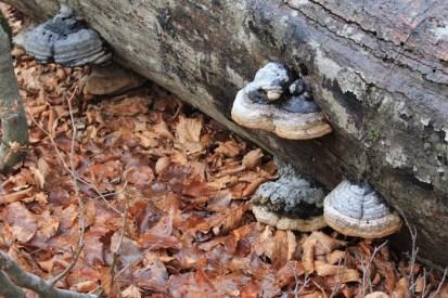 Barrea Foto di alberi e boschi