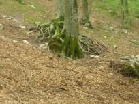 Boiano Alberi e boschi
