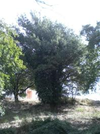 FOTO CERROSUGHERA a ROMA
