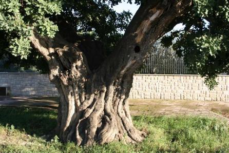 FOTO PISTACCHIO a TRANI (BT)2