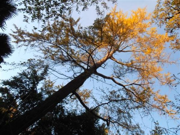 la foto rappresenta l'albero visto da vicino dal basso verso l'alto