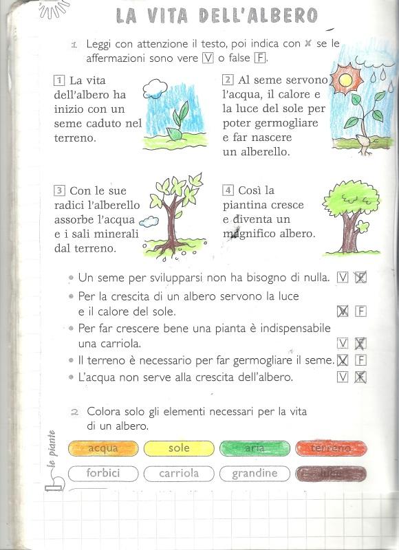 lavitadell'albero