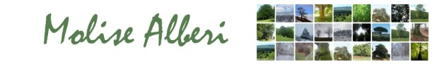 Molise Alberi Logo