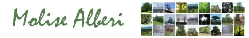 cropped-Molise-Alberi-Logo1-4.jpg