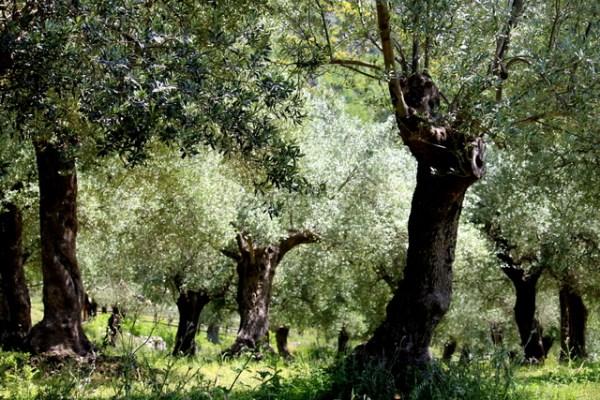 OliviVenafro