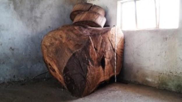 L'albero che non c'è più