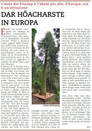 Articolo albero più alto d'Europa
