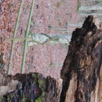 le parti di legno morte