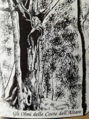 Olmo di Coste dell'Altare cm 400