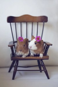 Hair Clips and Guinea Pigs – A Photo Shoot with a Difference