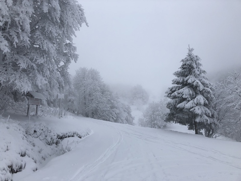 Snow covered trees in the Vosges Mountains