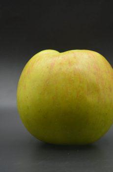 Bramley Apple