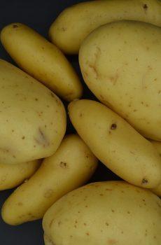Baking and salad potatoes