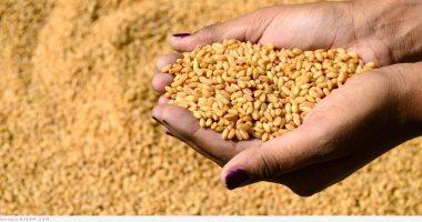صورة وزير الزراعة الروسى: مستعدون لوقف جميع قيود تصدير القمح لحين استقرار السوق