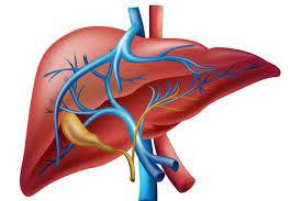 صورة أخصائية تغذية توضح الطرق الطبيعية لتنظيف الكبد