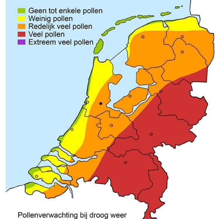 hooikoorts pollenverwachting