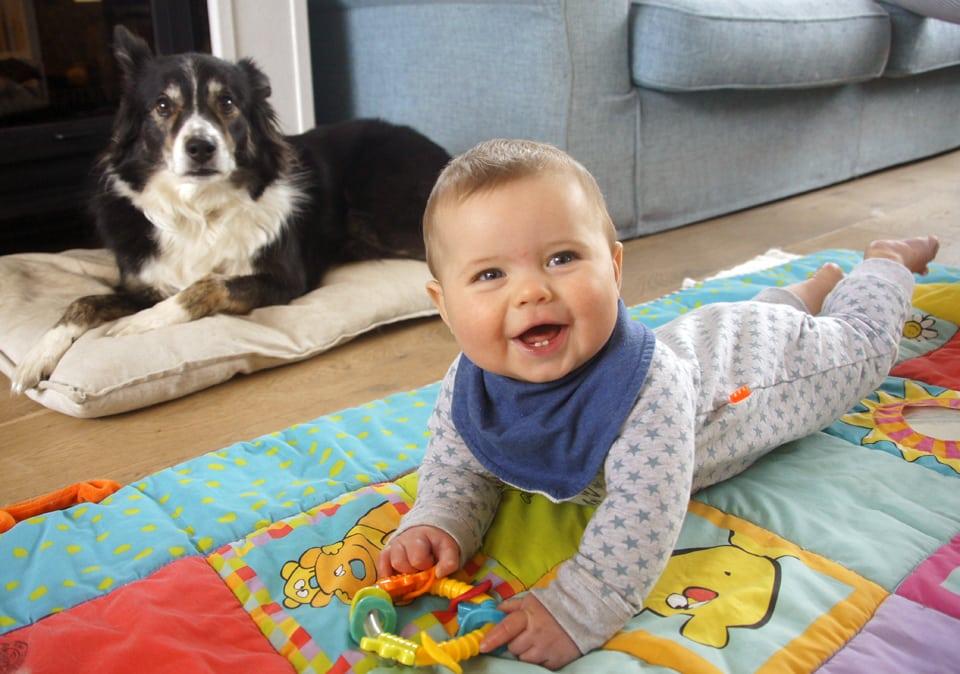 huisdieren en baby's