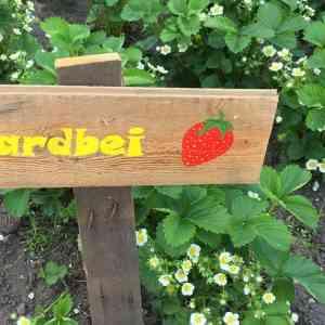 Moestuin DIY | Maak je eigen Garden signs