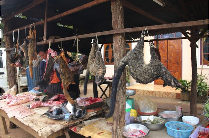 Wildlife markets are hotbeds of disease