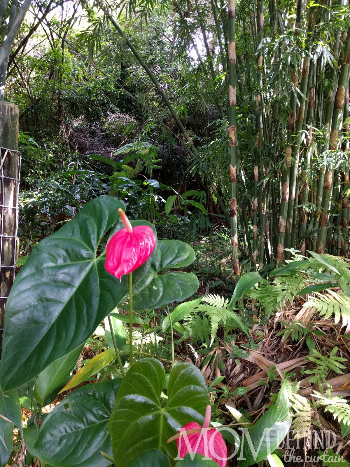 Road to Hana - Garden of Eden