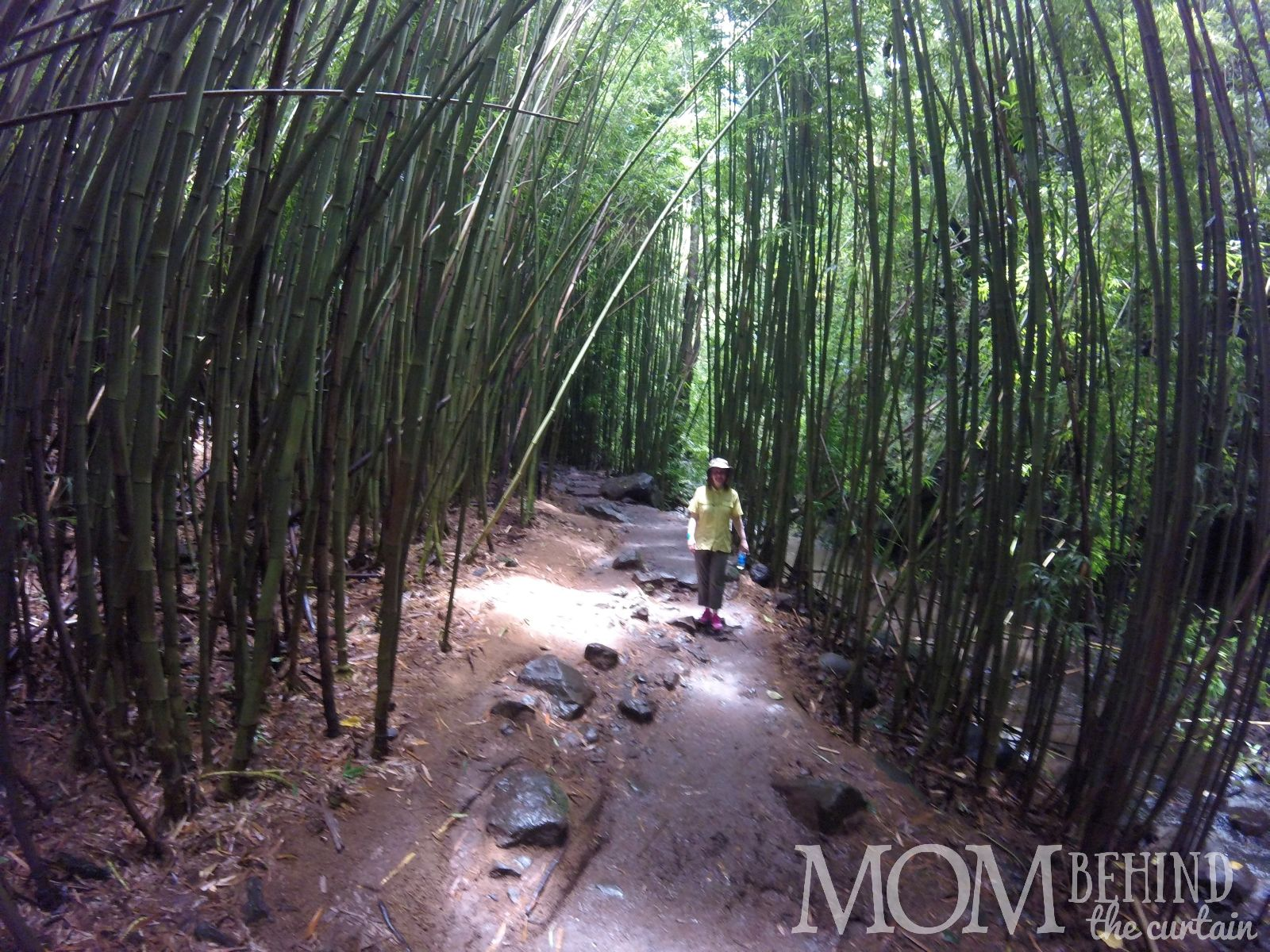 Bamboo Forest hiker Maui.