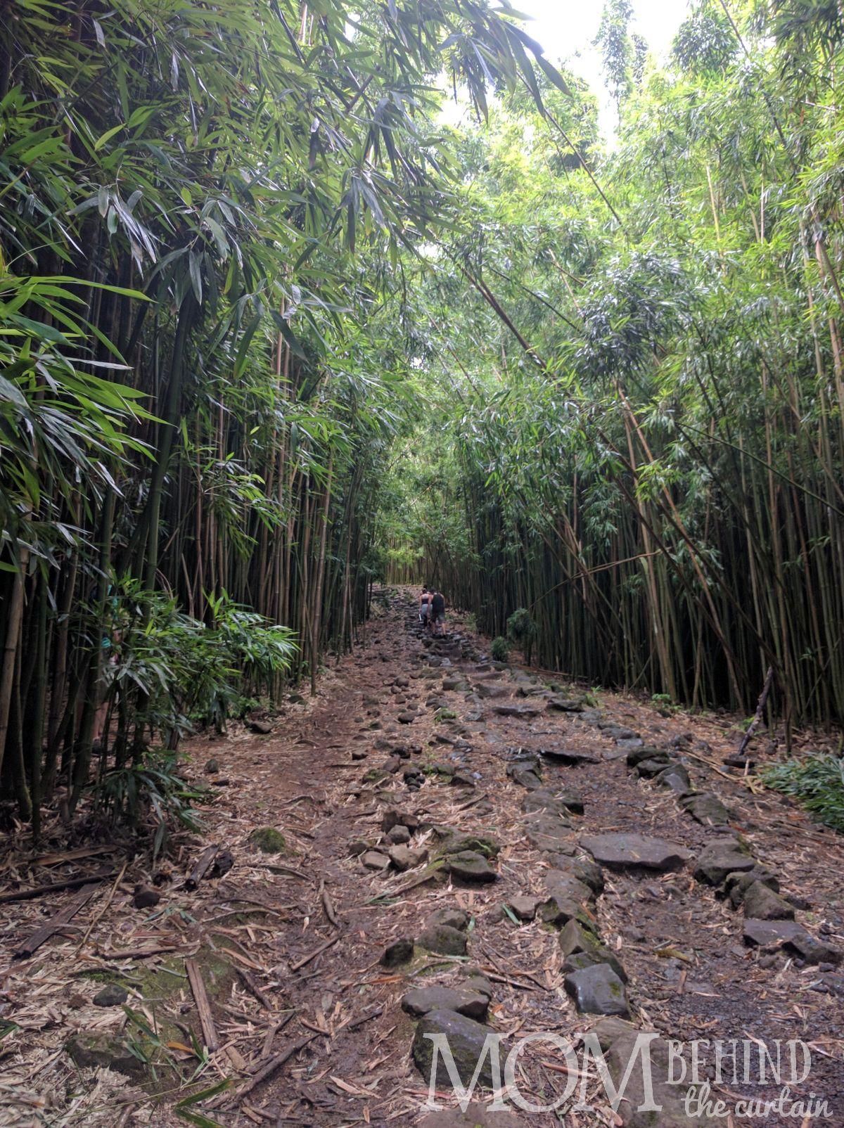 Rocky Pipiwai Trail in the bamboo Forest, Maui.