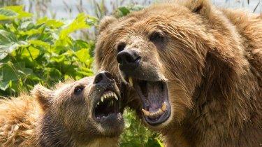 mama bear freakout momcave