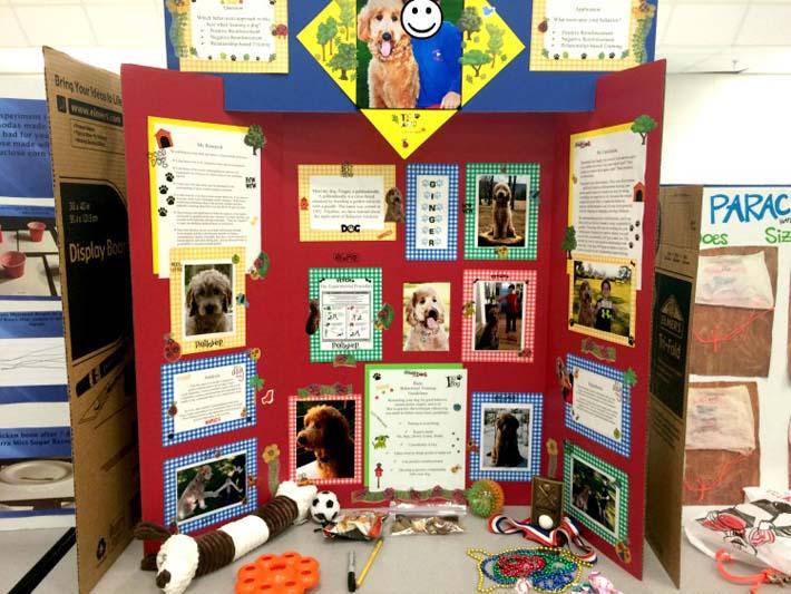 Board Set Project Science Tri Fair