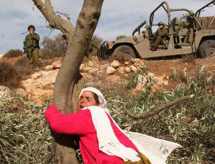 Palestinian woman hugging tree