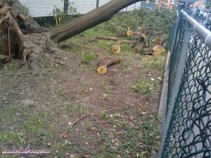 Tree broken and cut up