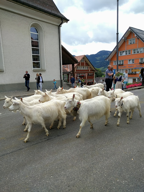 The Traditional Swiss Alpabfahrt Cow Parade In The Appenzell