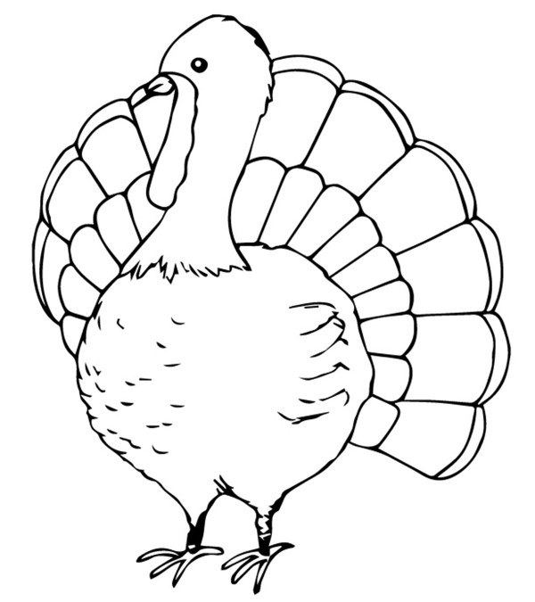coloring pages turkey # 9