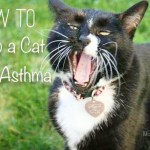 How to Help a Cat With Asthma