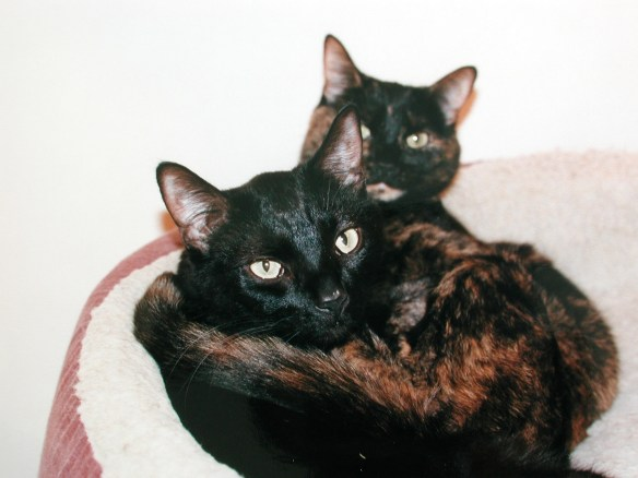 Nutmeg and Chance, many moons ago.