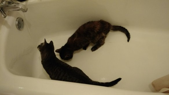 Learning from her elder how to drink from a faucet.