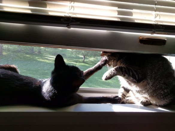 Cats liked looking out at the world while they were locked in our bedroom every day.