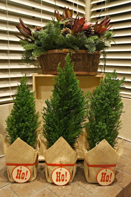 Ho Ho Ho plants trio Christmas decorations